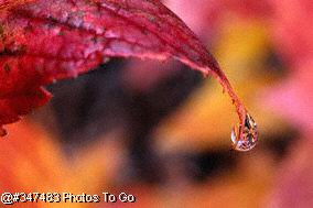Raindrop falling from colored leaf